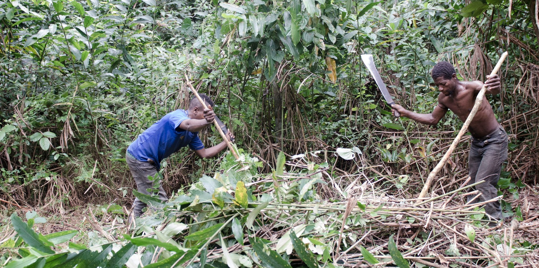 Pigmeos baka trabajando por su soberanía alimentaria en campos comunitarios
