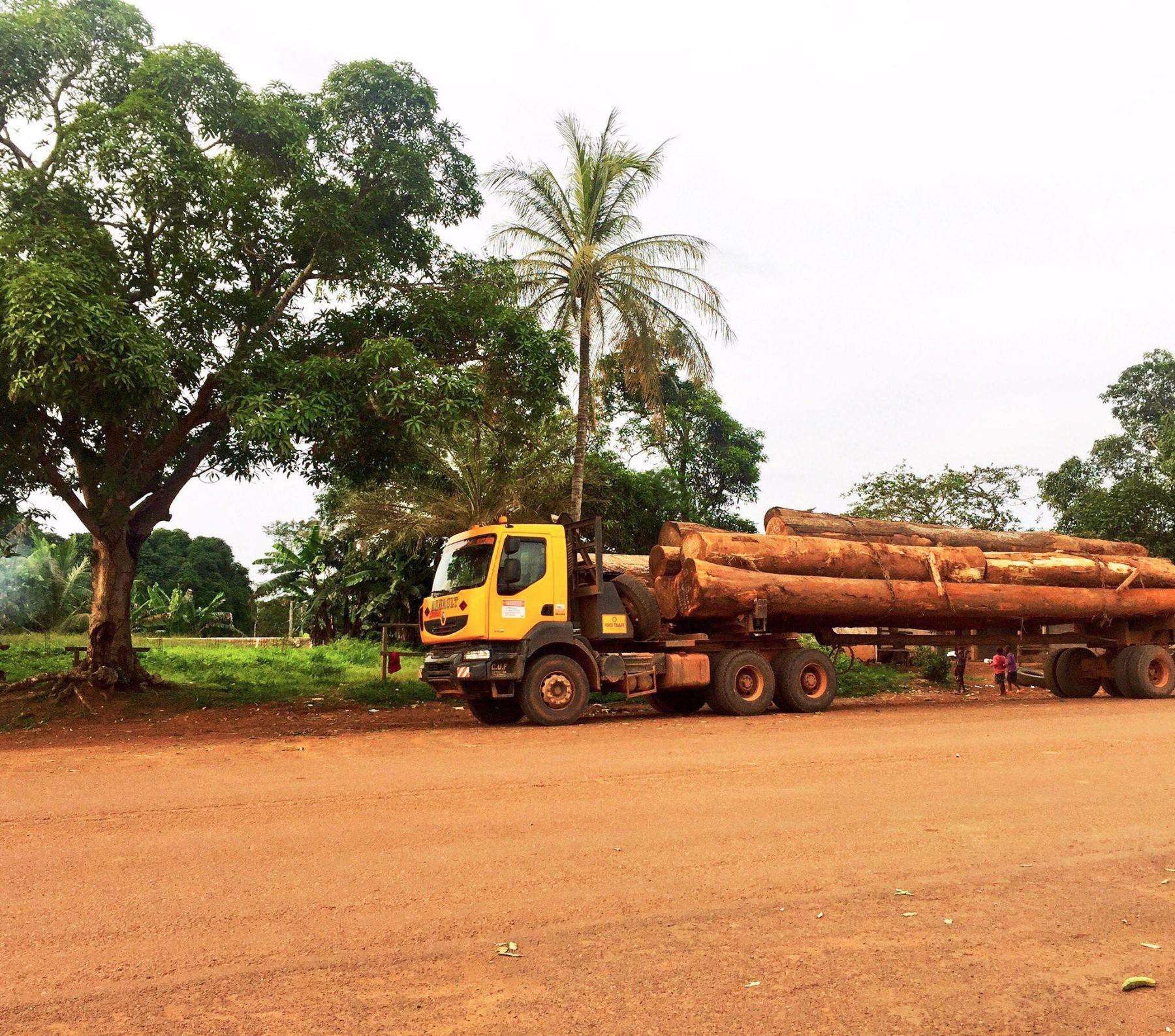 Deforestación en Camerún (África)