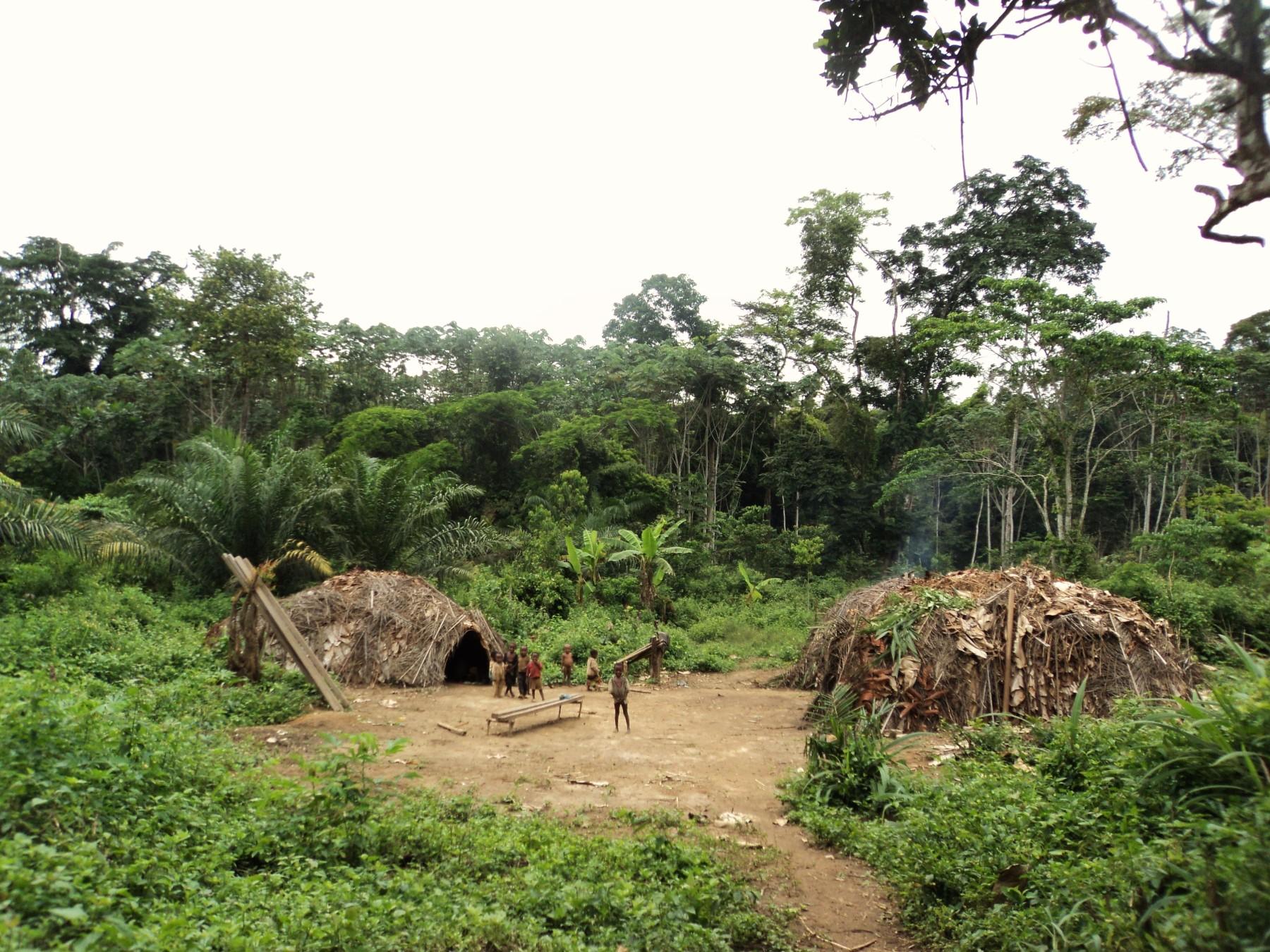 selva pigmeo baka