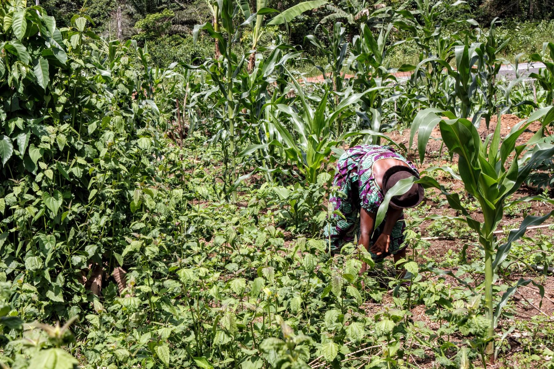 soberanía alimentaria en Camerún